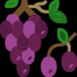 Ra hoa - đậu trái
